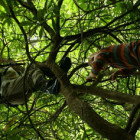 Tree Climbing - new addition to Adventure Centre portflio - Live the Adventure
